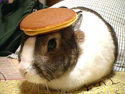 Oolong, the bunny with a pancake on its head.